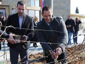Българските вина започват да навлизат все повече на азиатските пазари.