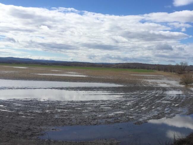 Наводненията унищожиха хиляди декари с посеви в Бургаско