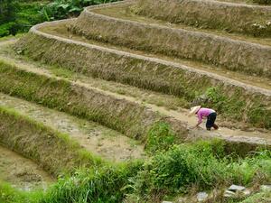 """Пекин продължава с реализацията на модела """"Интернет + земеделие"""""""