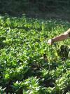 Порожанов: Няма неразплатени задължения към тютюнопроизводители през тази година