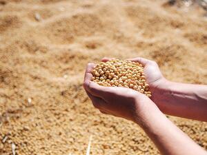 Китай няма притеснения от намаления внос на американска соя