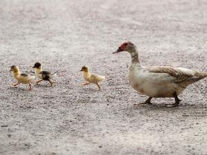 Открити са две огнища на птичи грип