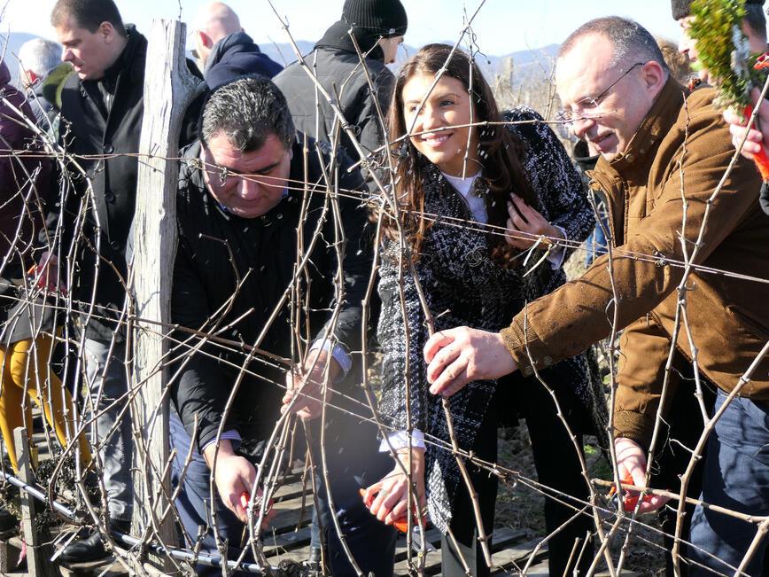 Лозовите масиви в България се увеличават всяка година