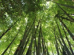 Горите се превръщат в популярна туристическа дестинация в Китай, като