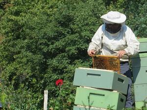 През изминалата седмица от Асоциацията на преработвателите на биологични пчелни