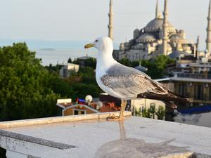 Турция зае седмото място в света класацията за експати –
