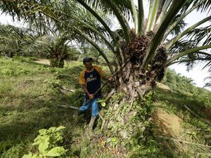 Снимка: Индонезия обяви търговска война на Европейския съюз