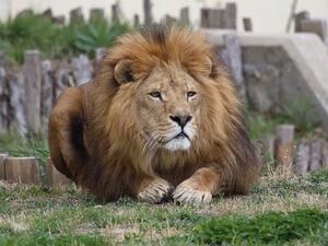 Над 900 доброволци ще почистят през днешния ден столичния Зоопарк.