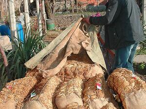 Производителите на тютюн ще получат 73 млн. лв. догодина