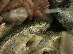 Бракуваха 800 кг риба от великотърновска фирма