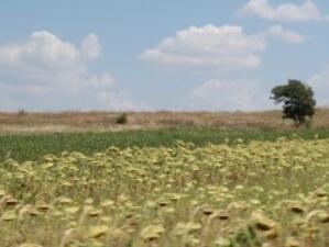 Пазарът на земи в Пловдивско остава стабилен
