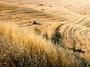 Турция - основен конкурент на България в износа на пшеница