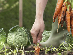 100 млн. евро чакат зеленчукопроизводителите