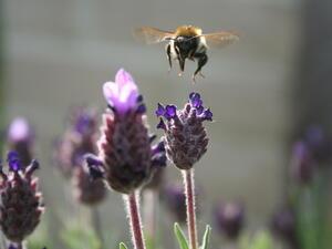 Пчеларите готвят национален протест