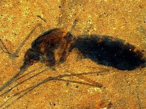 Един кръвопиец на 46 млн. години