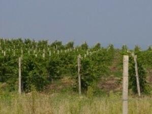 Компенсират земеделците за напълно пропаднали площи