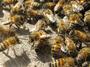 Започна подписването на договорите по пчеларската програма