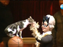 Може да забранят номерата с животни в цирка