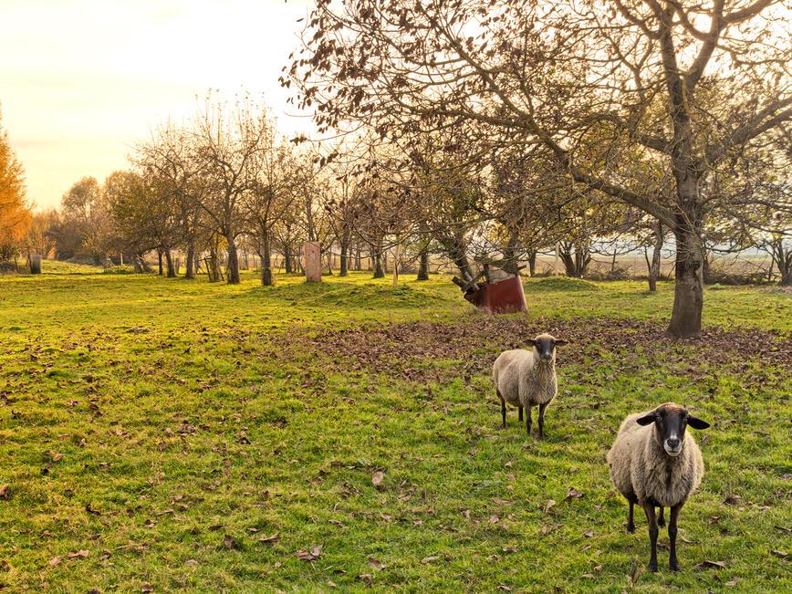 Програмата за развитие на селските райони стартира есента