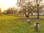 Отпускат още 4,6 млн. лева на животновъдите по схемата de minimis