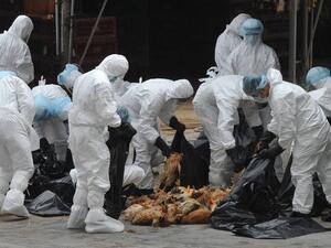Огнищата на птичи грип у нас продължават да се увеличават