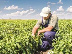 До 14-и юни се приемат проекти на млади земеделски стопани по подмярка 6.1