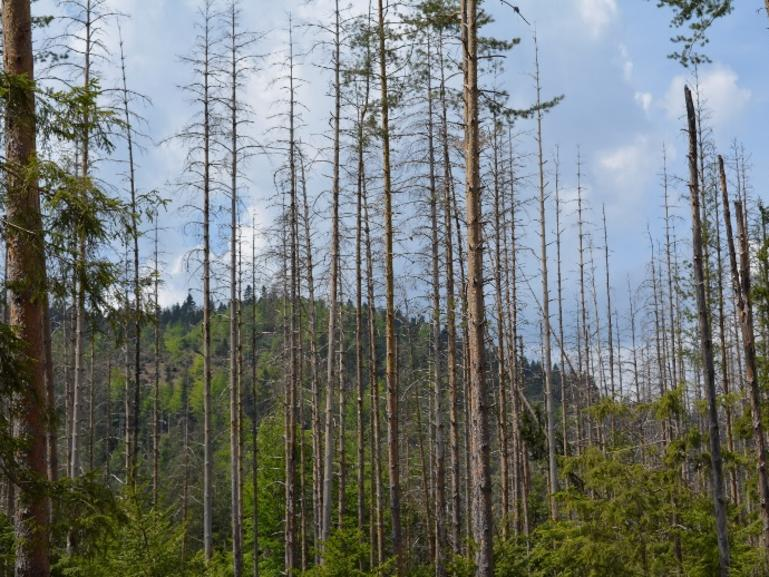 Продължава приемът на проекти за справяне с щетите по горите от природни бедствия