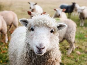 Нов протест на животновъдите в Ямболско