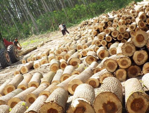 Близо 9 куб. м дърва за огрев от дъб и