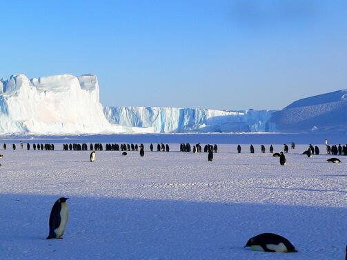 През миналата година Антарктида е била посетена от 8273-ма китайски