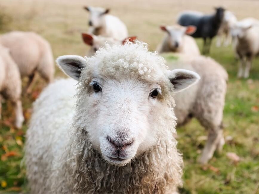 Осми национален събор на овцевъдите край Петропавловския манастир