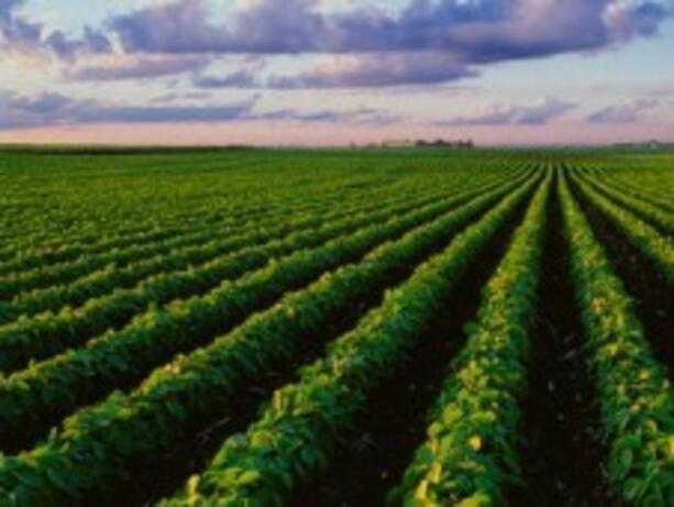 Сайтът за преброяването на земеделските стопанства е готов