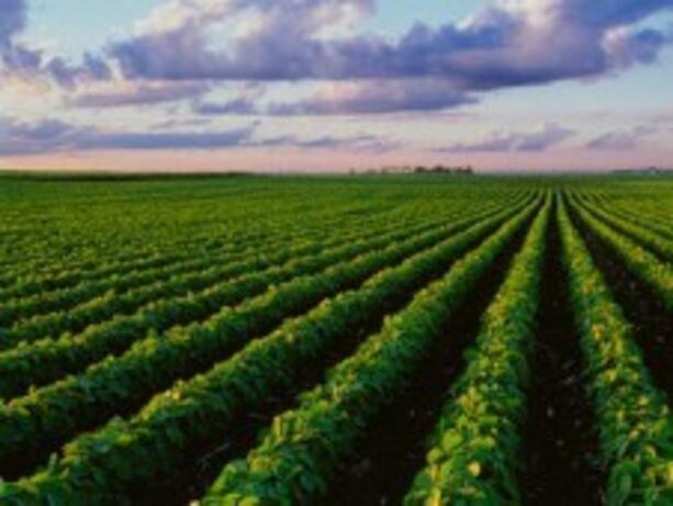 ЕК одобри нова държавна помощ за застраховане на селскостопанска продукция