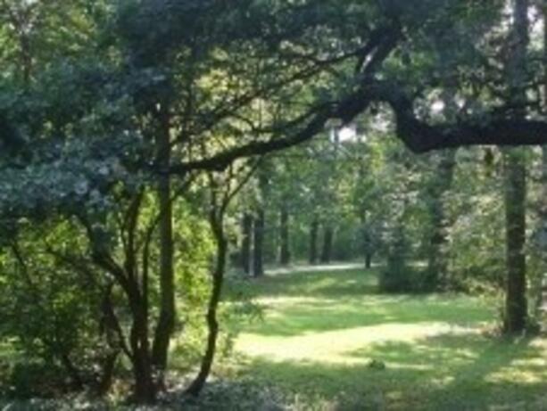 Стартира национална кампания за опазване на българските гори