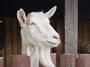 5 млн. лв. държавна помощ получават собствениците на кози и овце