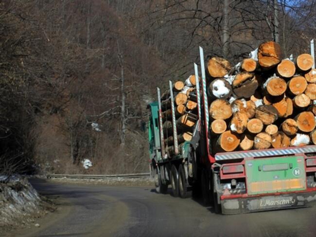 До края на годината електронната търговия с дървесина ще покрие цялата страна