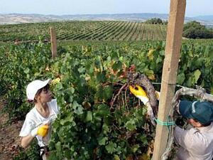 20 хил. земеделски производители получават безплатна консултантска помощ