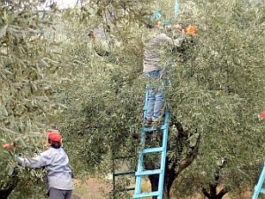 Производителите на плодове получават извънредно подпомагане