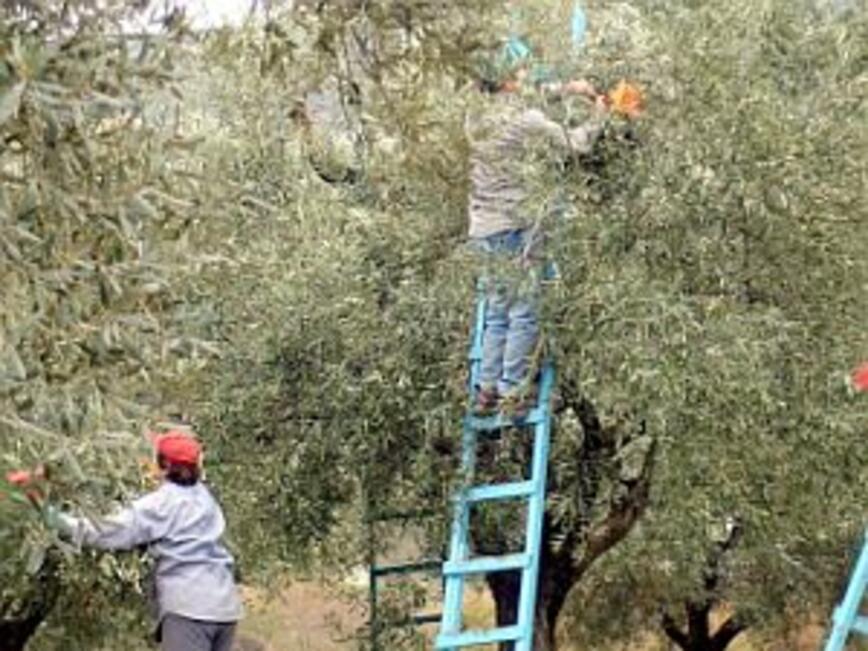 Български земеделски производители искат повече подкрепа от държавата