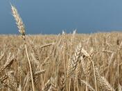 Земеделската земя в Плевенско поскъпва