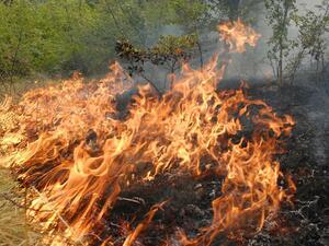 Голям пожар бушува между Тополовград и Гълъбово