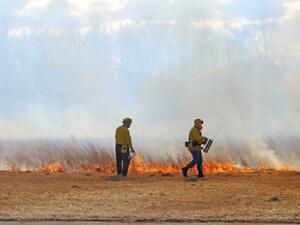 Пожарът между Тополовград и Крумово е локализиран