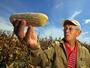 Танева: Салдото от търговия със селскостопански храни нарасна с над 5.6%