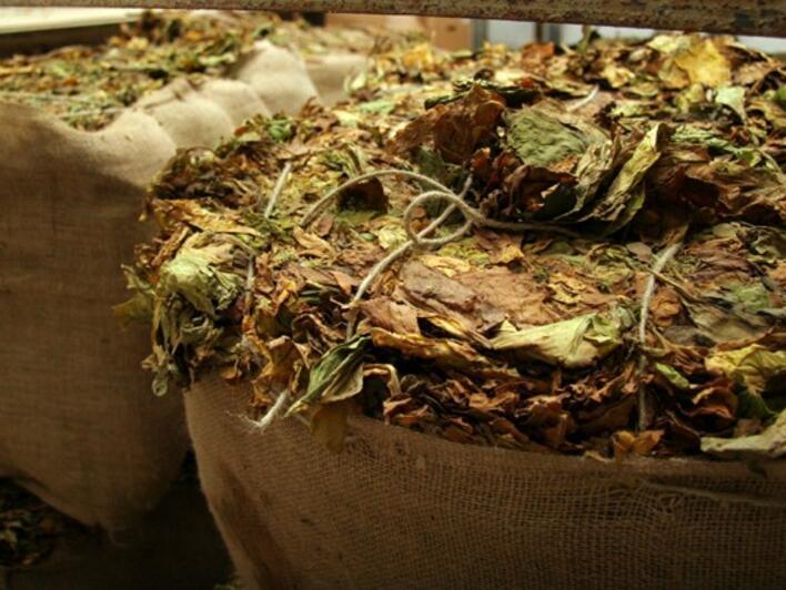 Тютюнопроизводителите кандидатстват за помощ de minimis