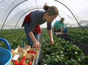Земеделци иратсрещу еднодневните договори