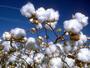Великобритания обеща да запази безмитния внос на продукти от бедните страни