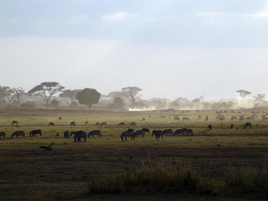 Кения се надява да привлече повече китайски туристи след посещението на Джак Ма