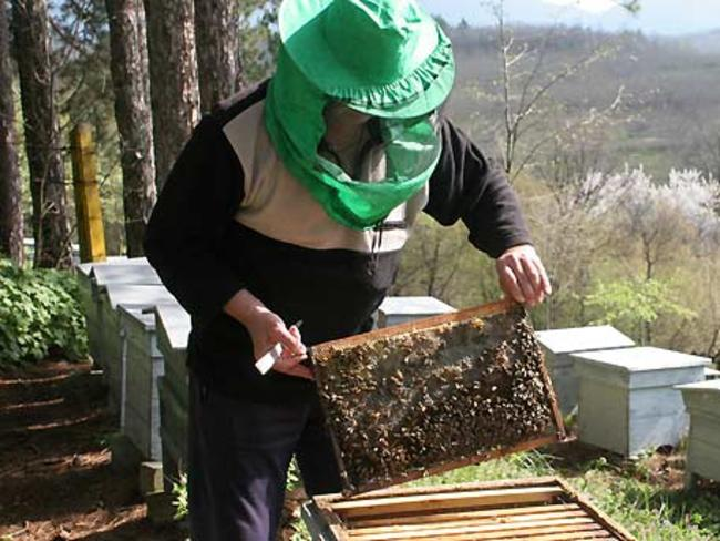По пчеларската програма е имало 70% усвояемост през 2017 г.