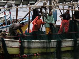 WWF алармира: Рибата в Европа свършва