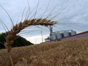 БАН: В България 4% от фермите стопанисват 80% от земеделските земи
